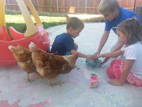 Painting with the chickens.  Happy chickens lay happy eggs :)