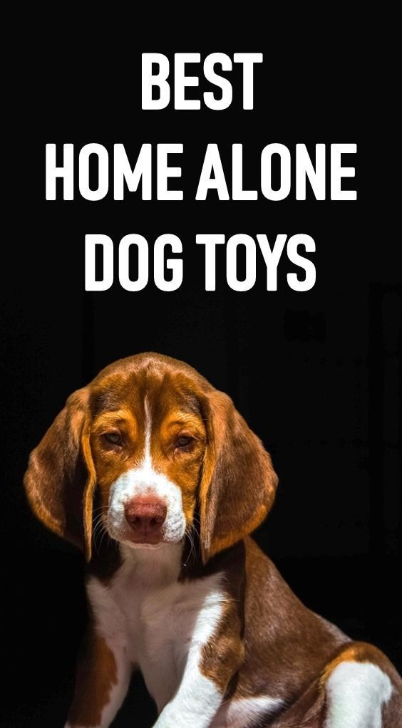 Dogs Get Bored When They Re Alone They Need Toys And Activities To Keep Them Entertained While You Are At Work Here Stimulating Dog Toys Best Dog Toys Dog Boredom
