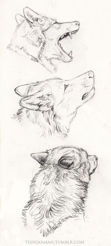 Bellísimo retrato de un lobo