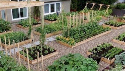 bfe3fce4e98f51b1175d6e0c9116dec0 - Best Vegetable Gardens In The World