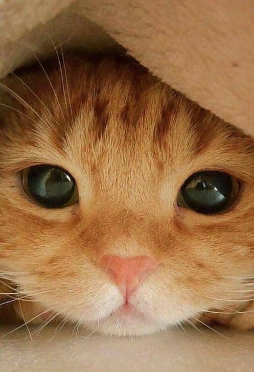Awe cute little baby kitten