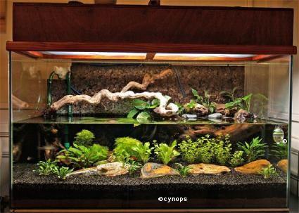 aquaterrarium cynops aquaterrariums pinterest. Black Bedroom Furniture Sets. Home Design Ideas