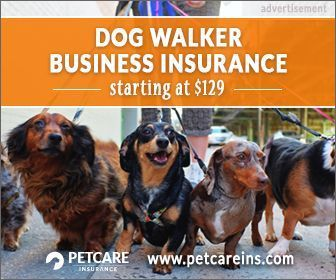 Important Information About Training Your Dog With Images Dog