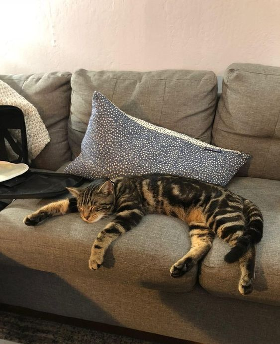 Big striped cat on a couch