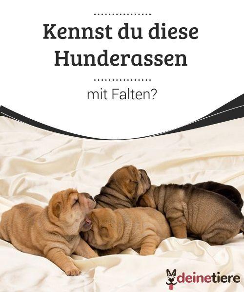Hunderassen Mit Falten Komisch Und Liebenswert Hunde Rassen Hunderassen Und Hunde