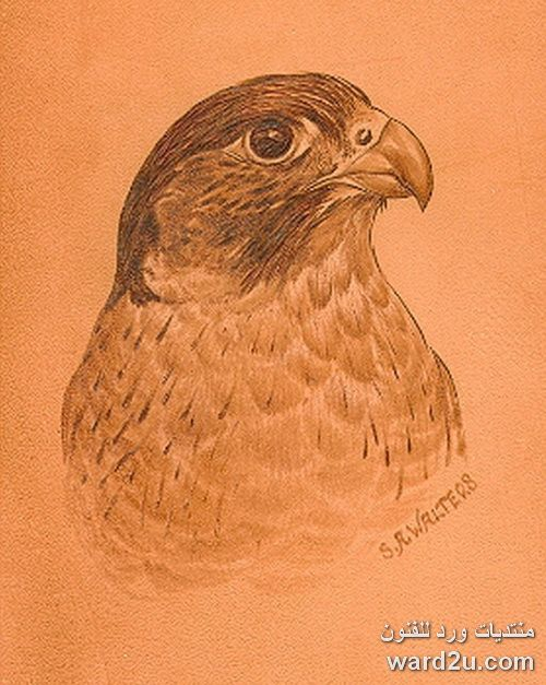 اشغال فنية حرق على الجلد Leather Animals Bird