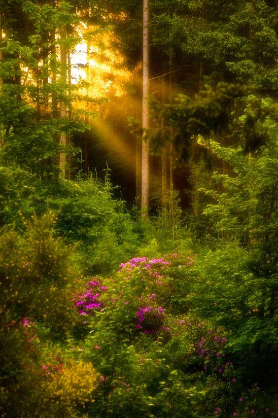 sunlightstream