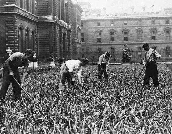 Planting in the Louvre courtyard during the war.