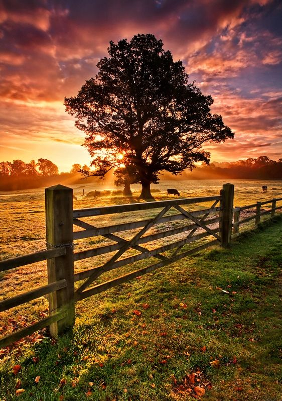 Armagh northern ireland and sunrises on pinterest for Country garden designs ireland