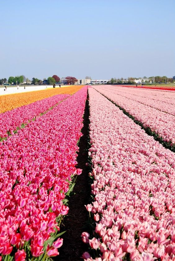 AMSTERDAM Keukenhof Gardens, The Netherlands
