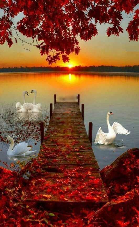 A Beautiful Capture Of Nature Sunset Credits To The Photographer Don T You Feel The Peace In This Pictu Autumn Scenery Beautiful Nature Beautiful Landscapes