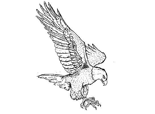 coloring #eagle #flying #pages #2020 | Eagle drawing, Bird ... | 402x546