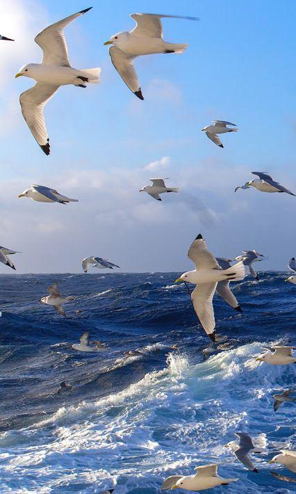 inseparables oiseaux C006f6c854c0e57ebaaf3b85b4715838