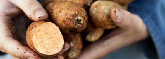 We zijn dol op zoete aardappel: gegrild, gebakken, als puree, in de soep of als…