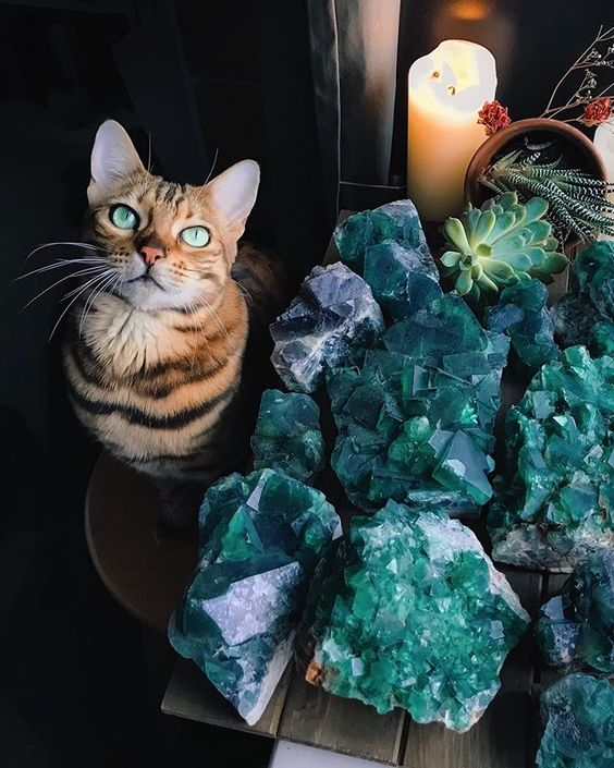 When the fluorite matches your eyes 😸💚