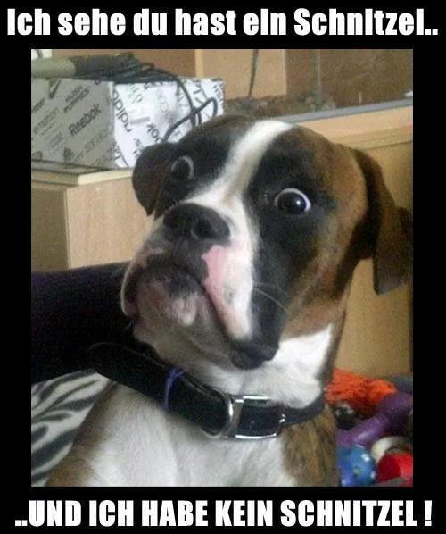 Dogge Meme Lustige Hunde Spruche Ipad Hulle Skin Von Untagged