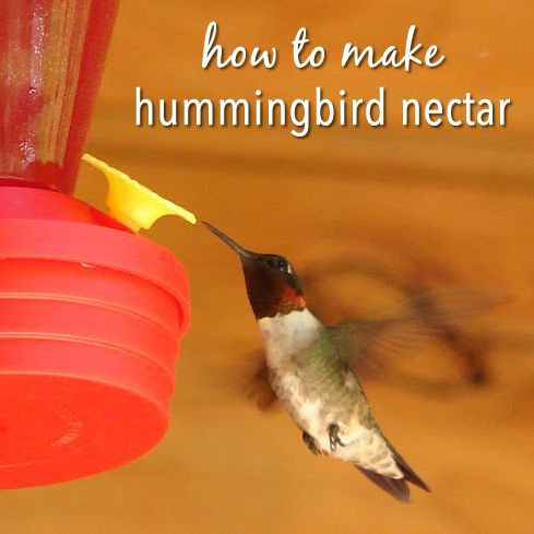 Hummingbirds, Water boiling and Poster on Pinterest
