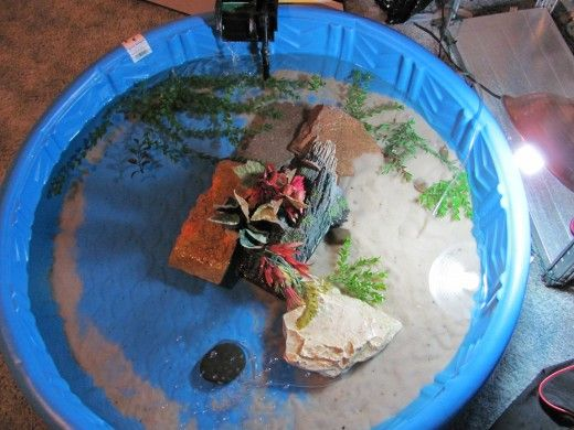 Pools turtles and indoor on pinterest Diy indoor turtle pond