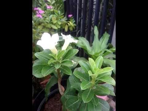 Pin Di Beautiful Flower
