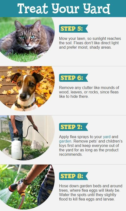 c015a3490c0f1fef98101c954ce606e8 - How To Get Rid Of Dogs From Your Yard