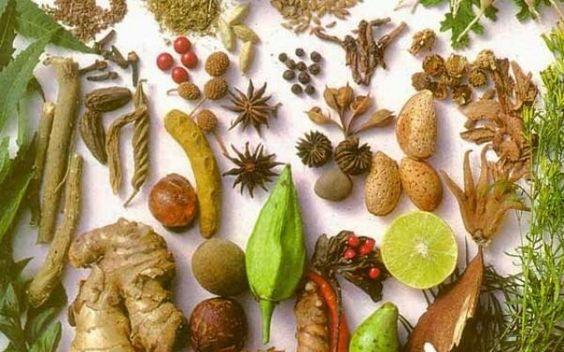 Le proprietà curative delle piante officinali..... #piantecurative #pianteofficinali