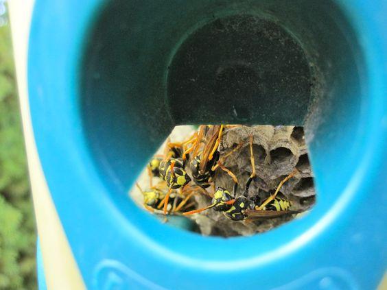 In the bird feeder.   BY Honey Bee