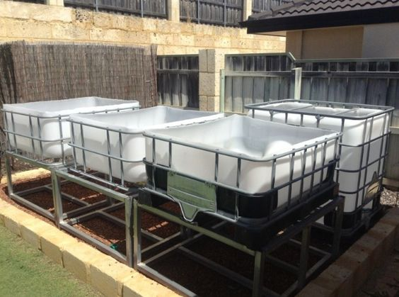 Aquaponics Aquaponics System And Food On Pinterest