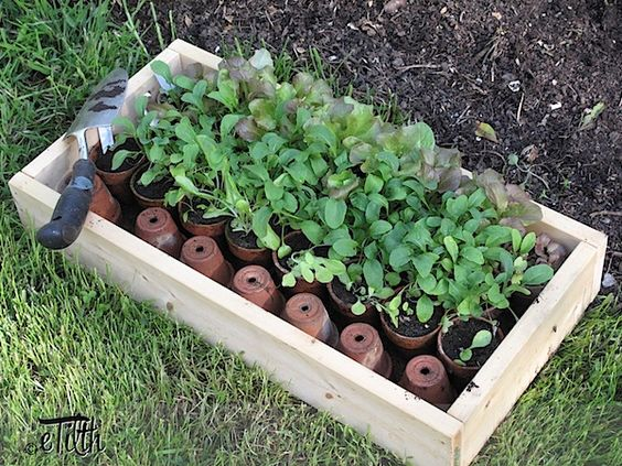 The Best Vegetable Choices For The Small Garden