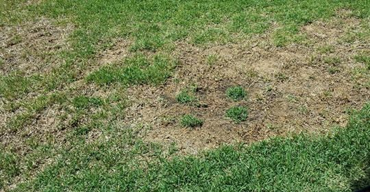 Here S How You Can Repair Brown Spots And Patches In Your Lawn