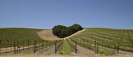 wineries paso robles- believe this is Niner