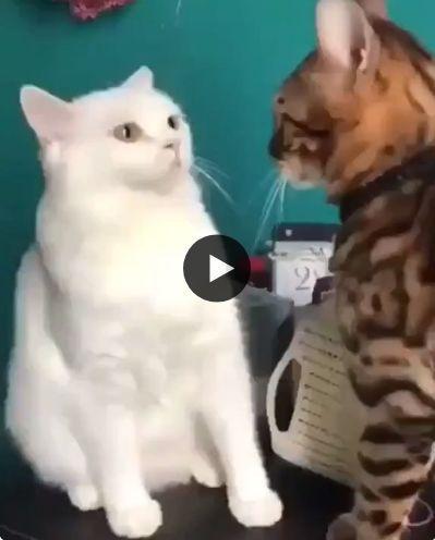 Você tá olhando o que meu parça?