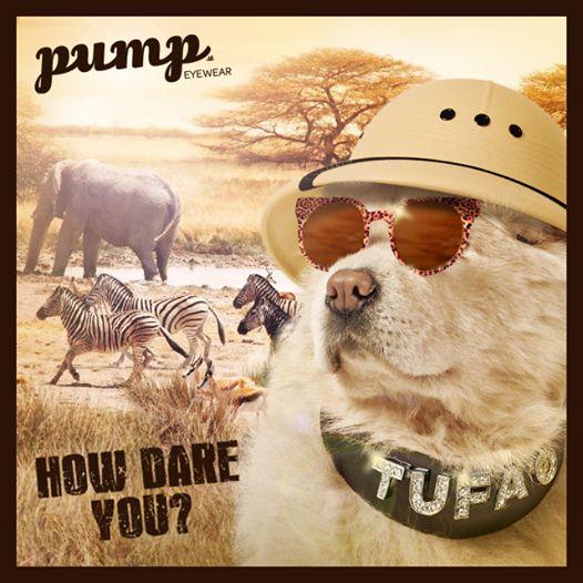 O Tufão, o cão da Raquel Strada, é a estrela da mais recente campanha da marca eyewear Pump.it (à venda em exclusivo nas lojas Well's).