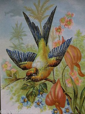 Colorful Bird & Flowers-Victorian Trade Card -Fleming Bros Mikado Cologne -PA
