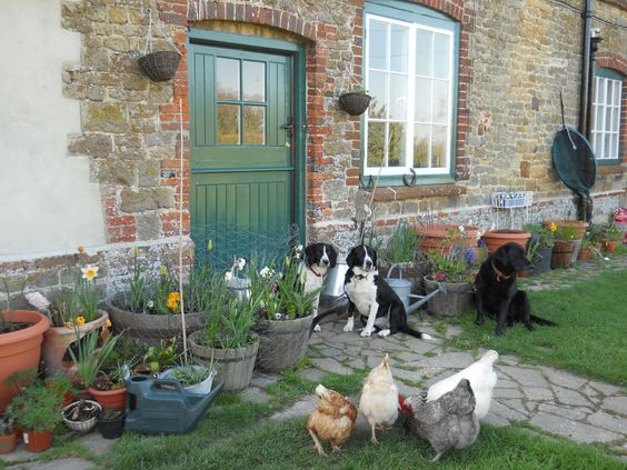 Stable door, dogs and chickens