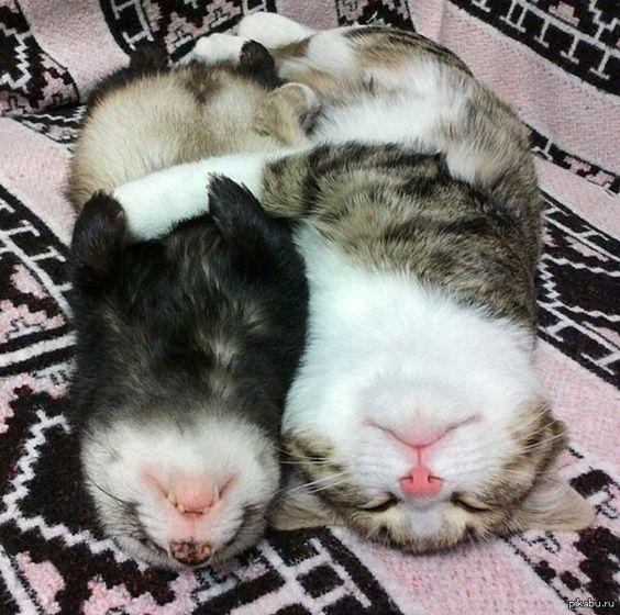 nobowl cat feeder