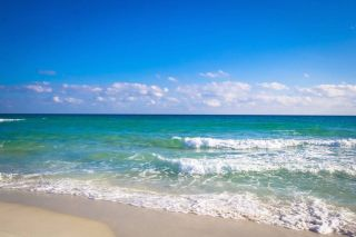 Perdido Key Condo For Sale, Purple Parrot