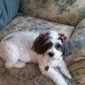 Snap-In Dog Bows® by SnapInDogBows on Etsy