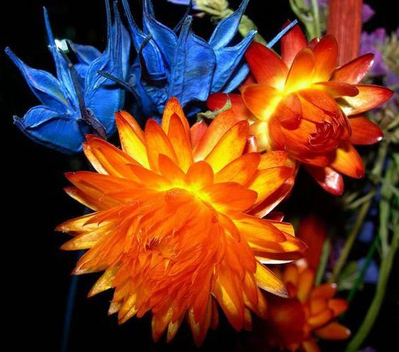 Lindo Crisântemo alaranjado #flores crisantemo flores alaranjadas flores laranja: