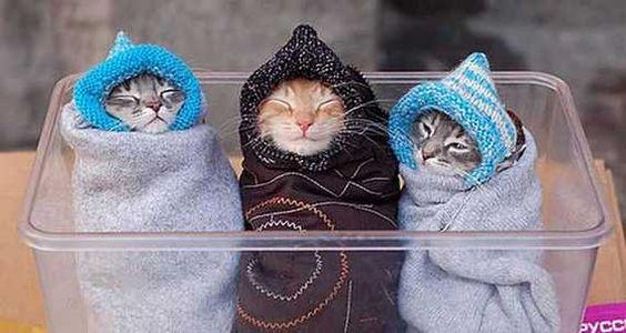 finally. transportable migrant kitties.