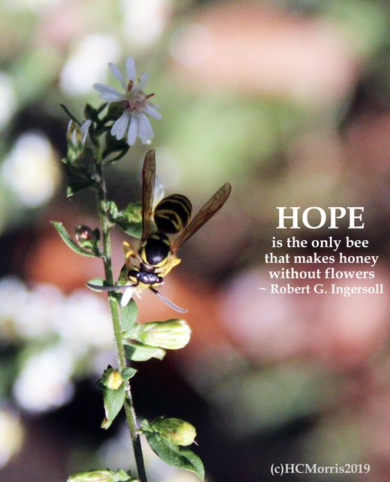 a wasp on a flower with Robert G. Ingersoll quote