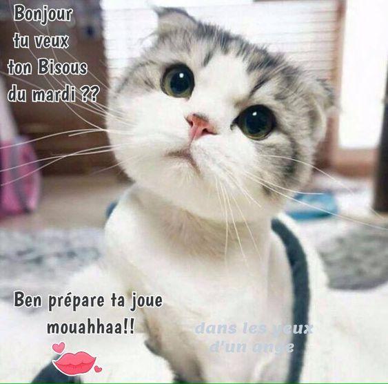 Mardi image #7583 - Bonjour tu veux ton Bisous du mardi ?? Ben prépare ta joue mouahhaa!! - Partager cette photo sur Facebook, Twitter et WhatsApp.