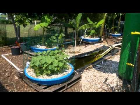 Ducks aquaponics and the duck on pinterest for Garden pool aquaponics