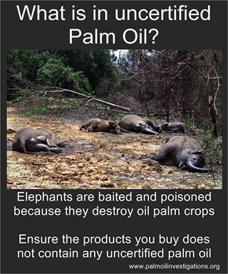 HELP SAVE LIVES & STOP DEFORESTATION BY SHOPPING RESPONSIBLY!