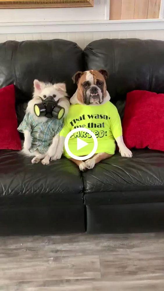 Ataque de gases do cão