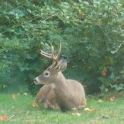 Homemade Deer Feed | eHow