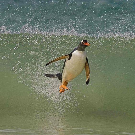 hover penguin