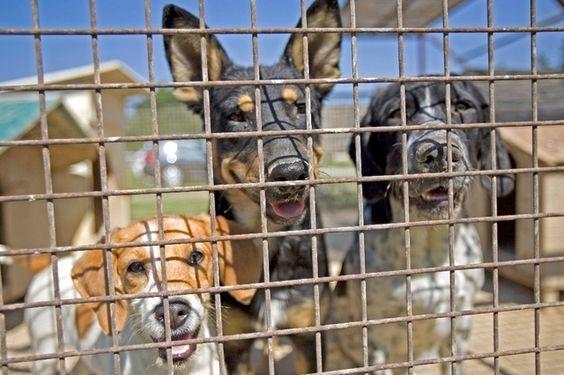 Les animaux importés toujours plus nombreux