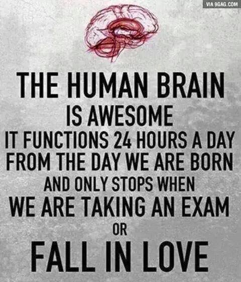 Truth about the human brain