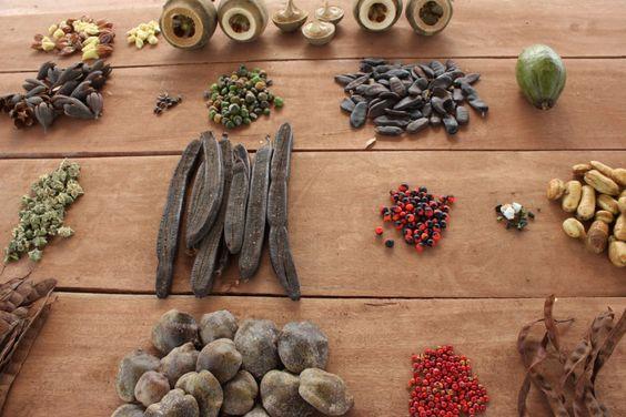 Guia de germinação de sementes florestais nativas