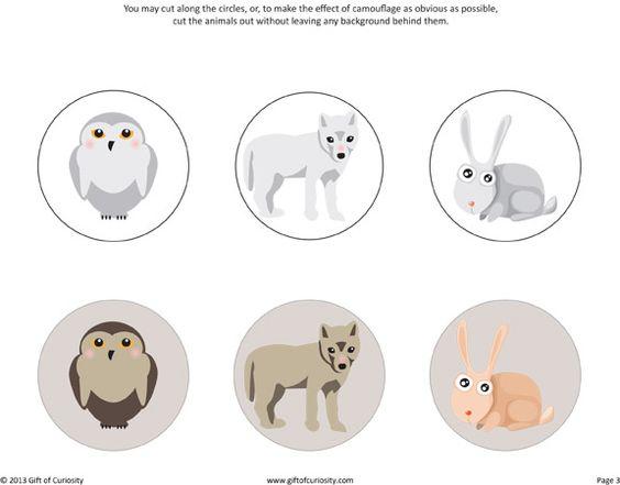 arctic animal camouflage activity free printable gift of curiosity poolgebieden lesidee n. Black Bedroom Furniture Sets. Home Design Ideas